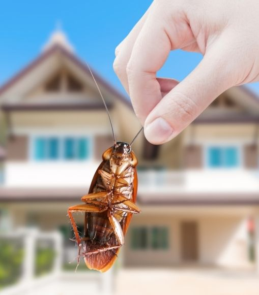 How to Get Rid of Cockroaches?