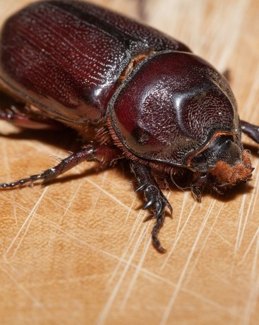 What Attracts Carpet Beetles in Your Home?